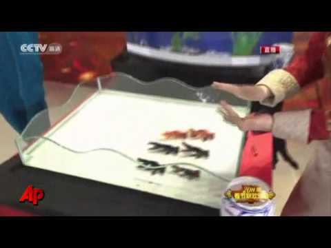 Raw Video: Chinese Worry Magic Trick Harms Fish
